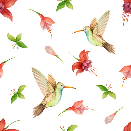 parakeet: Watercolor pattern, fuchsia flowers and Hummingbird on white background, vector illustration. Illustration