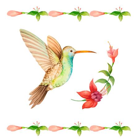 Hummingbird vliegen over een bloem fuchsia, waterverf, vector illustratie.