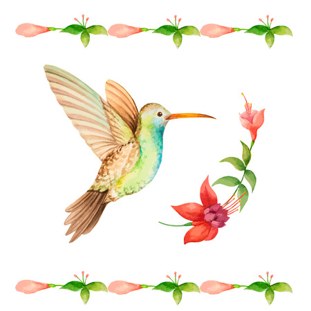 Hummingbird flying over a flower fuchsia, watercolor, vector illustration.
