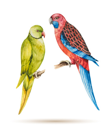 the two parrots: Two parrots sitting on a branch, watercolor vector illustration. Illustration