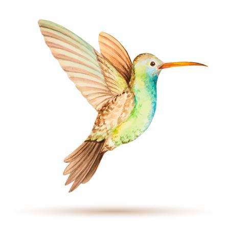飛行中、白い背景の上の水彩ベクトル図ハチドリ。