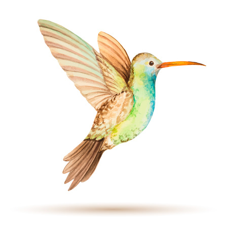 Hummingbird in flight, watercolor vector illustration on a white background. 일러스트