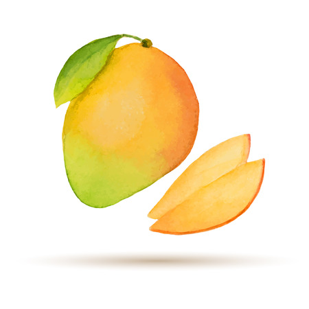 fruit juices: Mango  hand drawn watercolor, on a white background. Vector illustration.