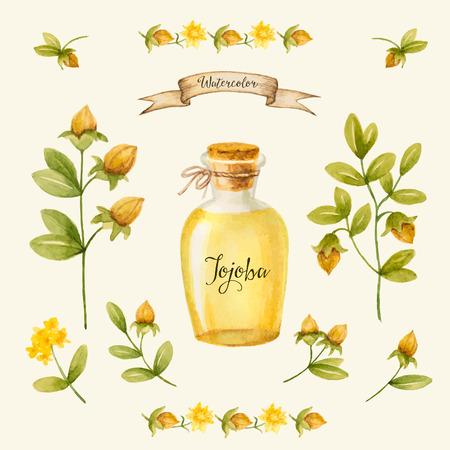 Jojoba oil, watercolor vector image, a medicinal plant.A healthy life. Ilustração