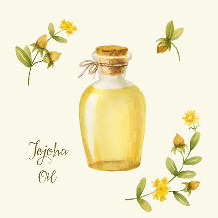 Jojoba oil, watercolor vector image, a medicinal plant.A healthy life. Ilustrace
