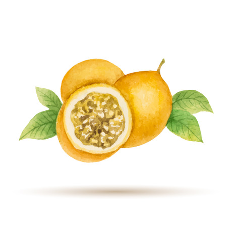 Passion fruit  hand drawn watercolor, on a white background. Vector illustration.