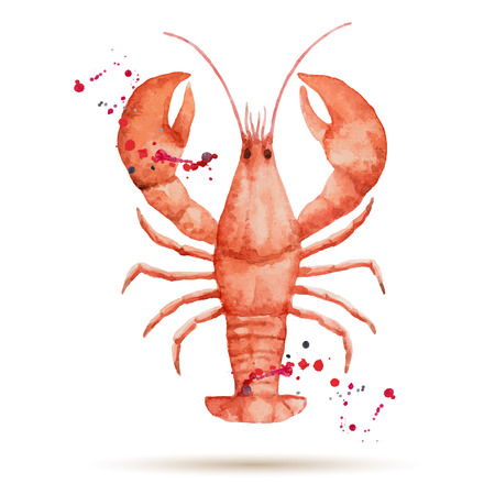 lobster dinner: Watercolor lobster. Fresh organic seafood. Vector illustration.