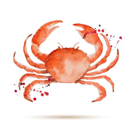 pez pecera: Cangrejo de la acuarela. Mariscos frescos org�nicos. Ilustraci�n del vector.