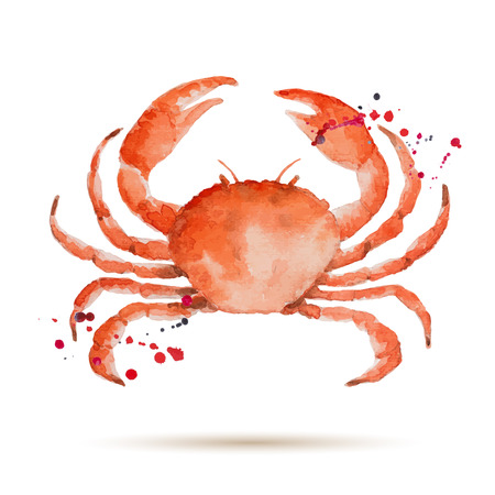 Watercolor crab. Fresh organic seafood. Vector illustration. Vettoriali