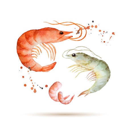seafood background: Watercolor shrimpr. Fresh organic seafood. Vector illustration.