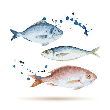 pez pecera: Pescados de la acuarela. Mariscos frescos org�nicos. Ilustraci�n del vector.