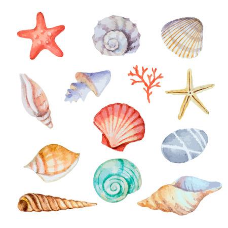 Acuarela conjunto de conchas de mar sobre fondo blanco para el menú o el diseño, ilustración vectorial. Ilustración de vector