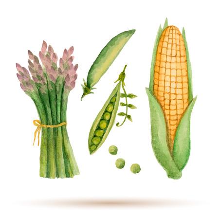 水彩の野菜、トウモロコシ、アスパラガス、グリーン ピースのセットです。
