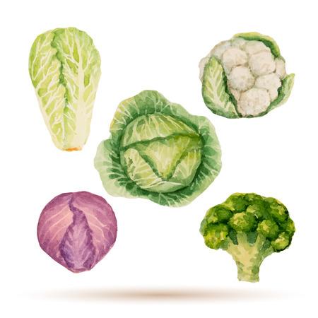 수채화 야채, 양배추, 브로콜리, 상추, 콜리 플라워의 집합입니다.