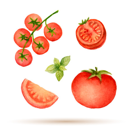 Set of watercolor vegetables,tomato.  Иллюстрация