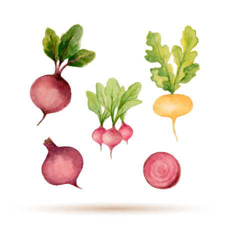 beets: Set of watercolor vegetables,beets, radishes, turnips. Vector illustration.