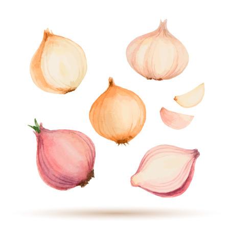 水彩の野菜、タマネギ、ニンニクのセットです。  イラスト・ベクター素材