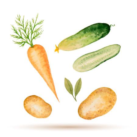 水彩の野菜、ニンジン、ジャガイモ、キュウリのセットです。ベクトルの図。