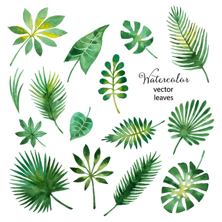 Set of watercolor green leaves isolated on white background, vector illustration. isolated on white background, vector illustration. Çizim