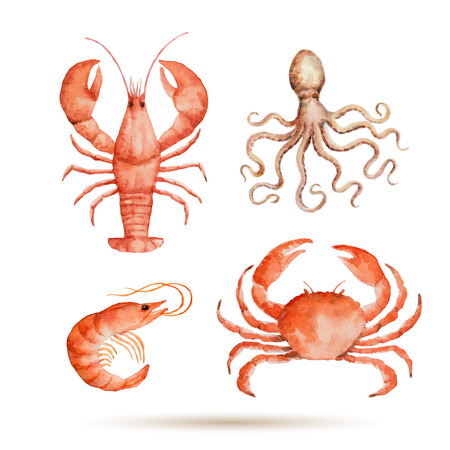 lobster: Watercolor set of seafood on white background. Fresh organic seafood. Vector illustration.