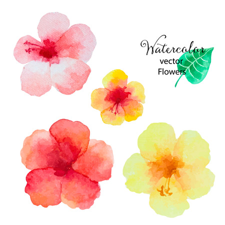Set of watercolor hibiscus flowers isolated on white background, vector illustration. isolated on white background, vector illustration.