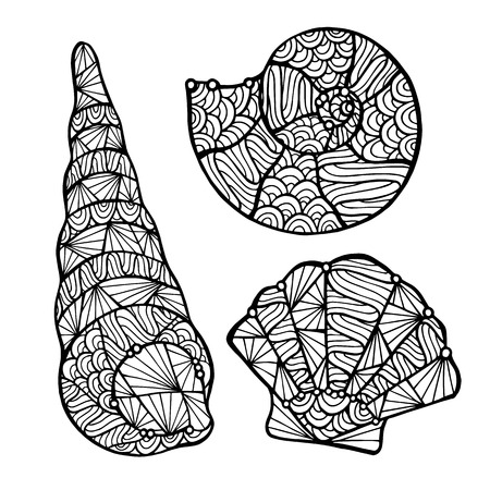 shell: Stylized vector shell, zentangle isolated on white background. Sea collection for your design.