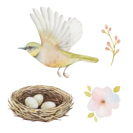 Watercolor set of bird and nest with eggs. Elements for your design. Vectores