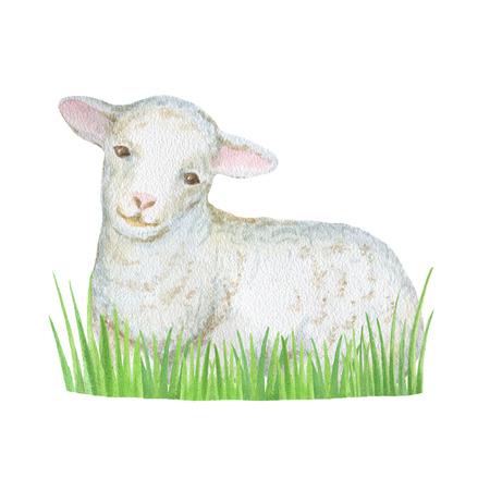 pasen schaap: Watercolor schapen en groen gras op een witte achtergrond. Stockfoto