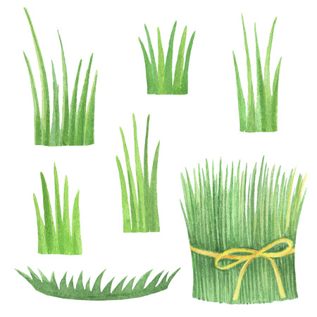 fields  grass: Set of watercolor flowers in green grass on a white background.