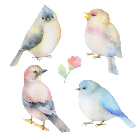 titmouse: Watercolor set of birds.  Hand painted illustration on white background. Elements for design of congratulatory cards, invitations, business cards and more.