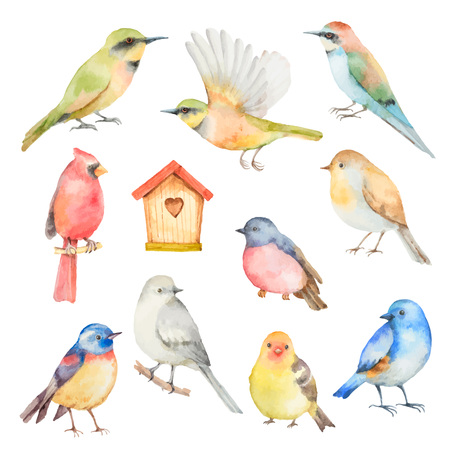 Watercolor vector set of birds.  Hand painted illustration  isolated on white background. Elements for design of congratulatory cards, invitations, business cards and more.