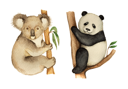 zoological: Watercolor Koala and Panda sitting on the tree. Cute bears for the zoological design.