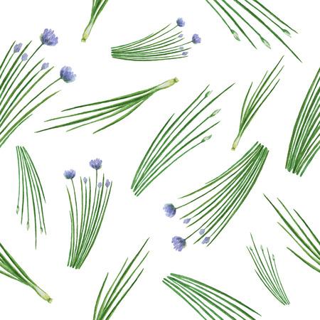 cebollin: vector de la acuarela patrón transparente dibujado a mano cebolletas hierbas. acuarela hojas y ramas de cebollino sobre un fondo blanco. Hierbas para el diseño de envases, tarjetas, postales e ilustraciones de libros. Vectores