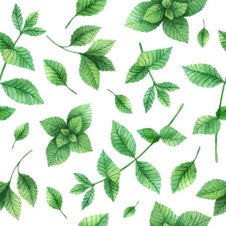 수채화 벡터 원활한 패턴 손으로 허브 민트 그린. 흰색 배경에 수채화 잎과 민트의 나뭇 가지. 포장 디자인, 카드, 엽서와 책 삽화 허브.