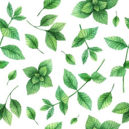 Watercolor vector seamless pattern hand drawn herb mint . Watercolor leaves and branches of mint on a white background. Herbs for packaging design, cards, postcards and book illustrations. Vettoriali
