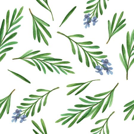 水彩ベクトル シームレス パターン手描きハーブ ローズマリー。水彩の葉と白の背景にローズマリーの枝。デザイン、カード、ポストカード、書籍