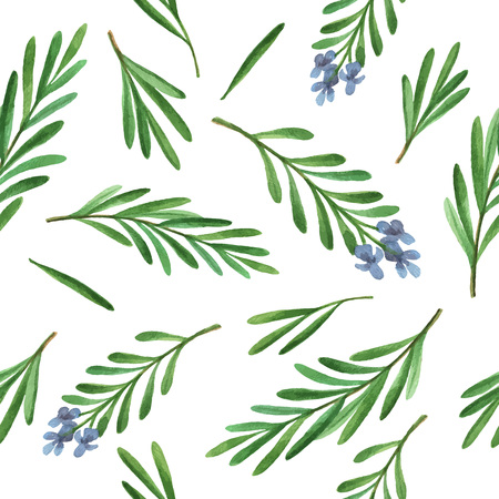 rosemary: Watercolor vector seamless pattern hand drawn herb rosemary. Watercolor leaves and branches of rosemary on a white background. Herbs for packaging design, cards, postcards and book illustrations.