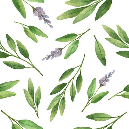 Watercolor vector naadloze patroon met de hand getekende kruidsalie. Watercolor bladeren en takken van salie op een witte achtergrond. Kruiden voor packaging design, kaarten, ansichtkaarten en boekillustraties.