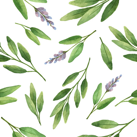 sage: Watercolor vector seamless pattern hand drawn herb sage . Watercolor leaves and branches of sage on a white background. Herbs for packaging design, cards, postcards and book illustrations.