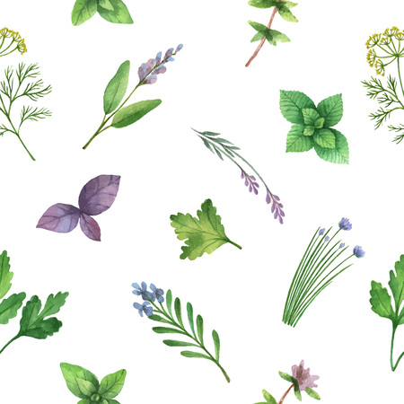 cilantro: Watercolor vector seamless pattern hand drawn herb . Watercolor leaves and branches of herb on a white background. Herbs for packaging design, cards, postcards and book illustrations. Illustration
