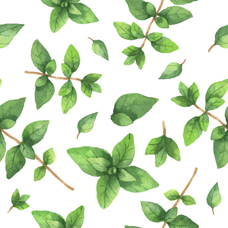 水彩ベクトルのシームレスなパターンの手描きハーブのオレガノ。水彩の葉と白の背景にオレガノの枝。デザイン、カード、ポストカード、書籍イラストの包装のためのハーブ。 写真素材 - 56577791