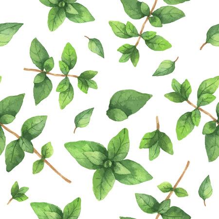 Watercolor vector naadloze patroon met de hand getekende kruid oregano. Watercolor bladeren en takken van oregano op een witte achtergrond. Kruiden voor packaging design, kaarten, ansichtkaarten en boekillustraties.