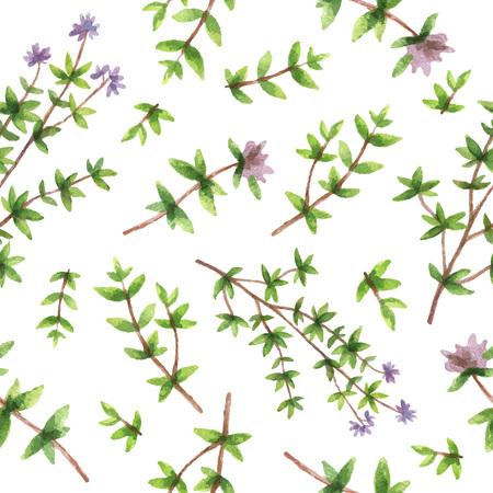 Aquarell Vektor nahtlose Muster Hand Kraut Thymian gezogen. Aquarell Blätter und Zweige Thymian auf einem weißen Hintergrund. Kräuter für Verpackungsdesign, Karten, Postkarten und Buchillustrationen.