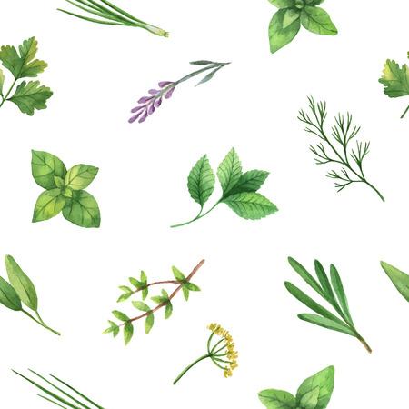 Aquarell Vektor nahtlose Muster Hand gezeichnet Kraut. Aquarell Blätter und Zweige von Kräutern auf einem weißen Hintergrund. Kräuter für Verpackungsdesign, Karten, Postkarten und Buchillustrationen.