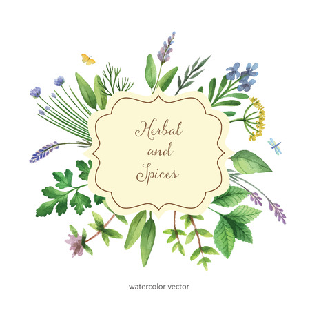 chive: Watercolor vector hand painted banner with herbs and spices. The perfect design for greeting card, skrabbuking, menus, packaging, kitchen decor, cosmetics, natural and organic products. Banner with space for text. Illustration