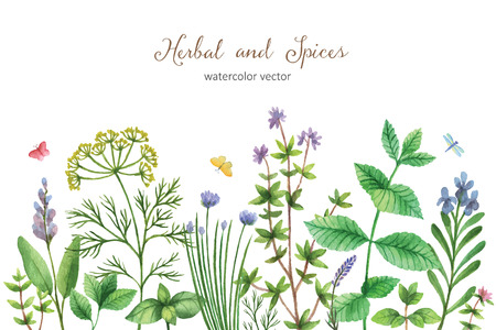 edible: Watercolor vector hand painted banner with wild herbs and spices. The perfect design for greeting card, skrabbuking, menus, packaging, kitchen decor, cosmetics, natural and organic products. Background with space for text.