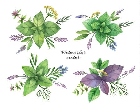 Acquerello vettore dipinto a mano serie di mazzi di erbe. Il design perfetto per biglietto di auguri, skrabbuking, menu, confezionamento, decorazione della cucina, cosmesi, naturali e prodotti biologici.