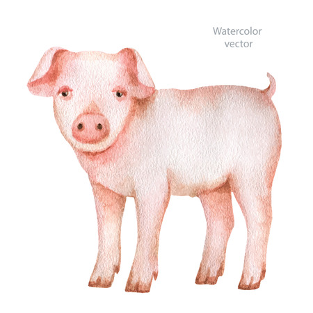pigpen: Watercolor hand drawn pig on a white background. Vector illustration for your design. Illustration