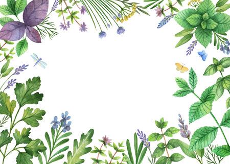 perejil: acuarela pintada a mano pancarta con hierbas silvestres y especias. El diseño perfecto para la tarjeta de felicitación, empaque, de la cocina, cosméticos, productos naturales y orgánicos. Fondo con el espacio para el texto.