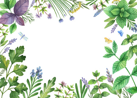 Watercolor hand painted banner with wild herbs and spices. The perfect design for greeting card, packaging, kitchen decor, cosmetics, natural and organic products. Background with space for text. Stock Photo